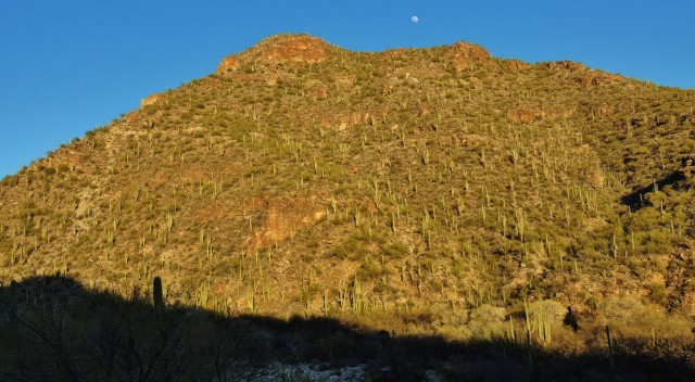 Moon Over Sabino Canyon, Sabino Canyon Recreation Area - Tucson, AZ