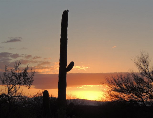 Desert Sunrise - Tucson, Arizona