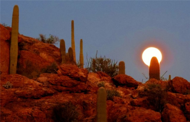 My Wisconsin Space 187 Saguaro In The Moon Light Gates Pass