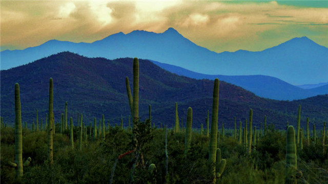 Twillight in the Tucson Mountains