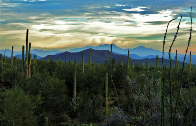 Evening Twilight, Tucson Mountains