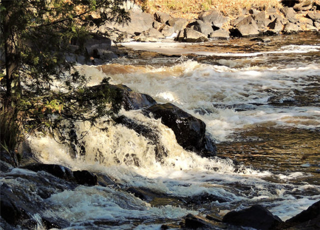 Whitewater, turtle-river