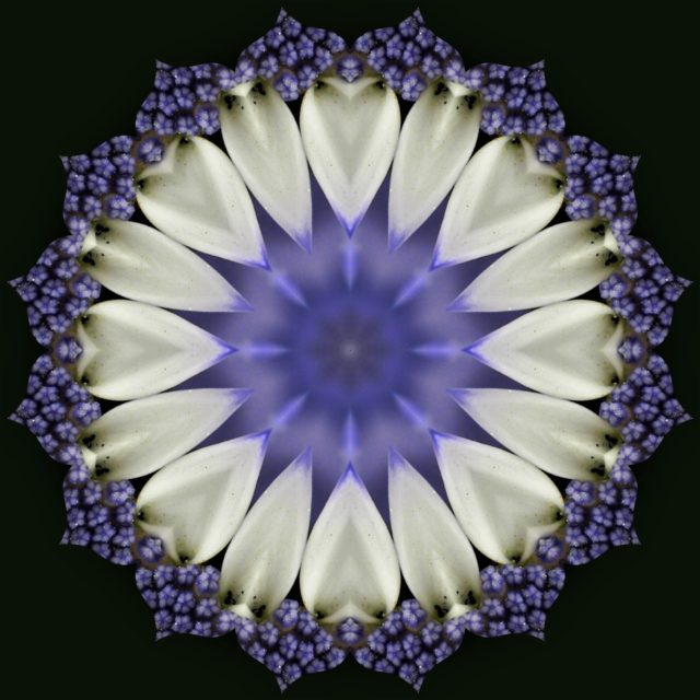 My wisconsin space kaleidoscope image of the center of a blue and kaleidoscope image of the center of a blue and white flower monona wisconsin mightylinksfo