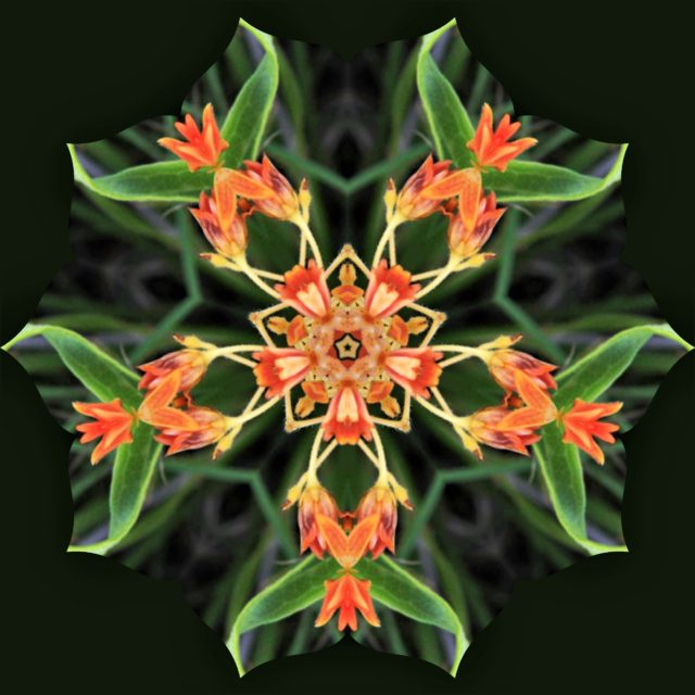 Garden Kaleidoscope At Olbrich >> My Wisconsin Space Kaleidoscope Image Of Orange Flower Olbrich
